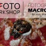 Workshop Fotografia Macro